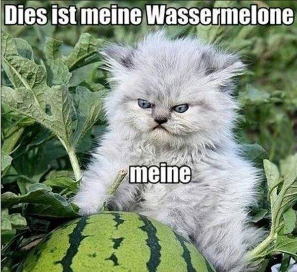 Mein Watermelon