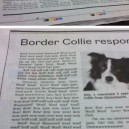 Border Collies Response