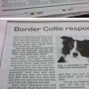 Border Collies Response
