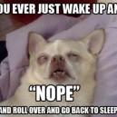 Ever Wake Up