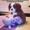 Fractured Puppy