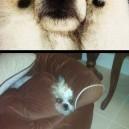 Hide n Seek Dogs