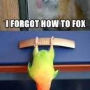 I Forgot How To…