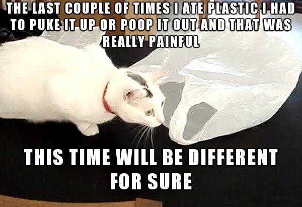 Last Couple Times