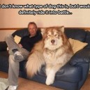 What type of dog