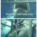 A Helpful Shark