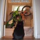 Do Strange Things