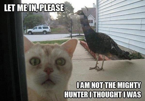 Let me in please!