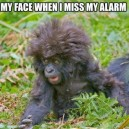 Miss my alarm