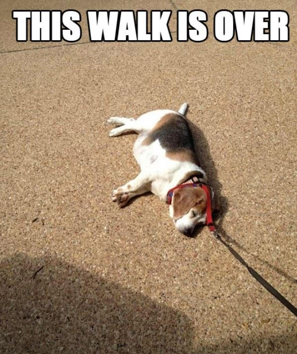 This walk is over