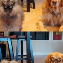 Animal face swap