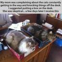 Cat Holders