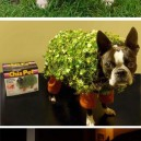 Crazy Pet Costumes