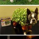 Crazy Pet Costumes