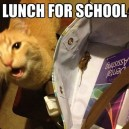 Packed you lunch
