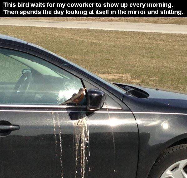 This Bird