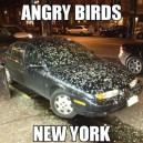 Angry Birds New York