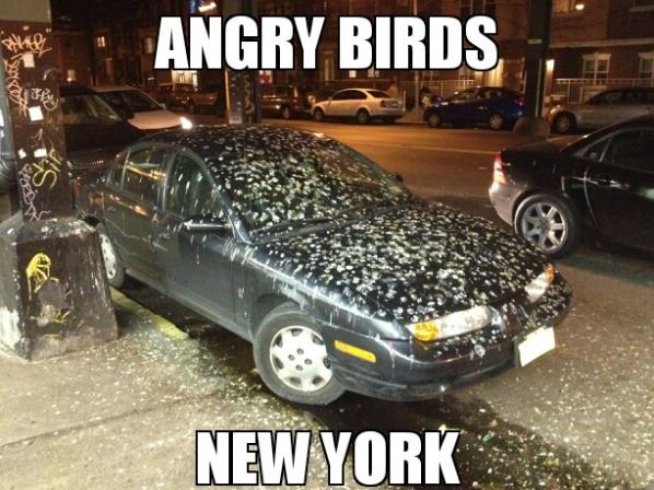 Angry Birds New York