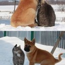 Best Friends Cat and Dog