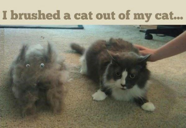 Brushed a Cat