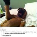 Dog hates socks
