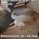 Dog hates the vet