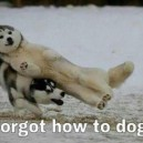 Forgot how to dog