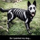 I painted my dog
