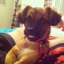 Say Cheese Dog