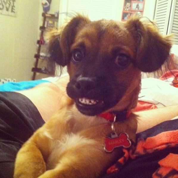 Say Cheese Dog