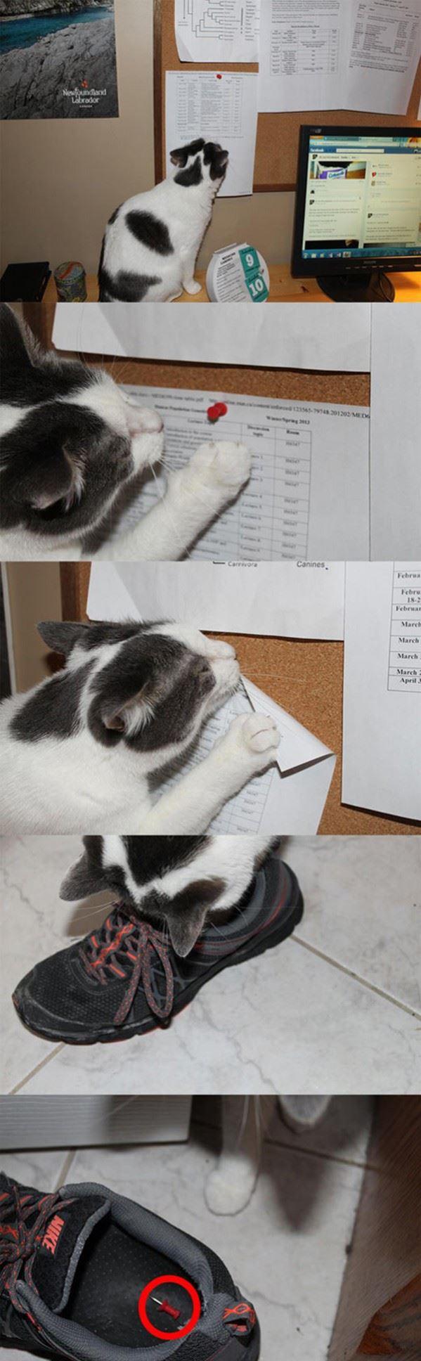 This cat is evil