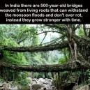 500 year old bridges