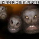 Dog Noses