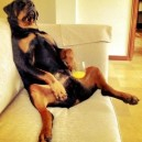 Dog lounging around