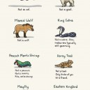 Misleading animal names