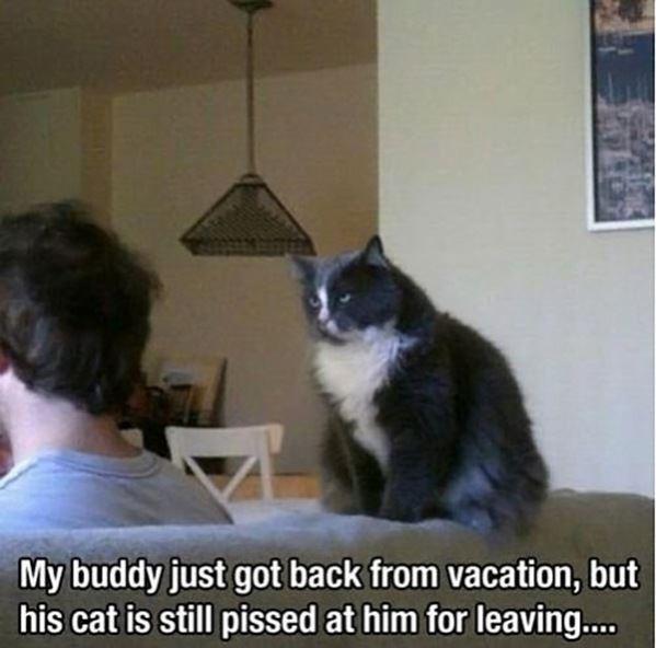 The cat is not happy
