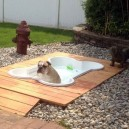 The doggy pool