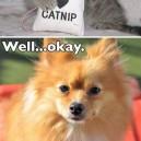 Try Some Catnip