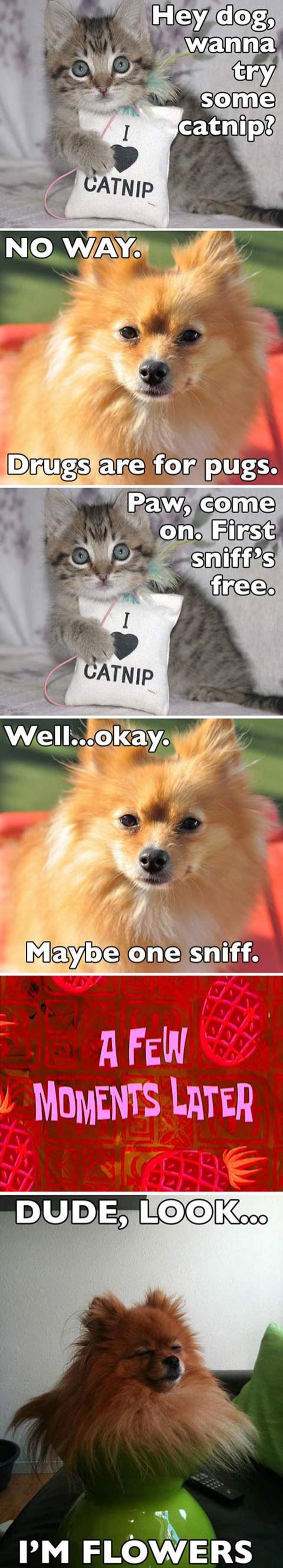 Try Some Catnip