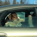 At the stop light