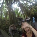 Don't take selfies with a monkey