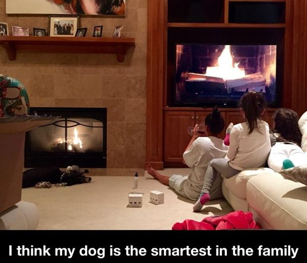 I think my dog is the smartest in the family