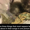 Money, oregano, and cats