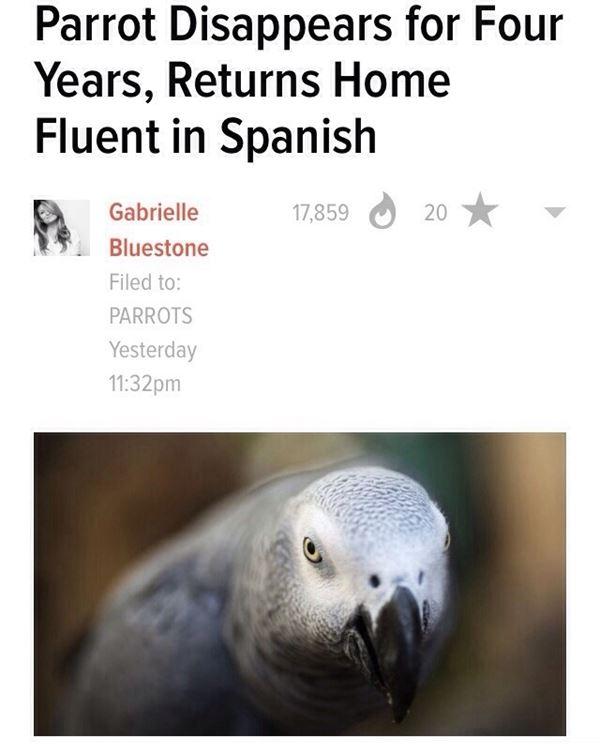 Spanish parrot