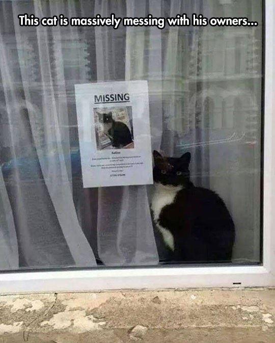 Trolling cat