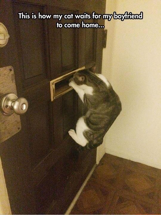 Loyal kitty