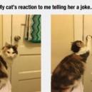 Cat doesn't like your joke