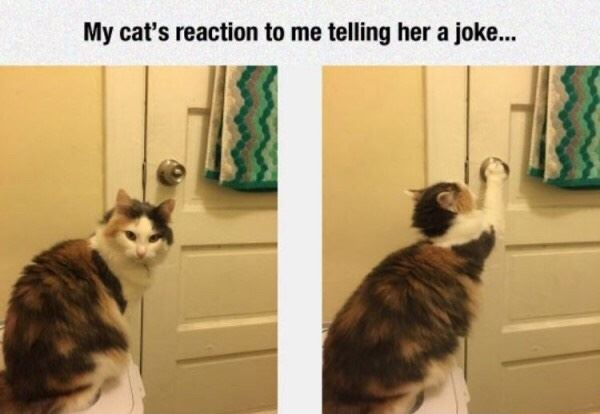 Cat doesn't like your joke