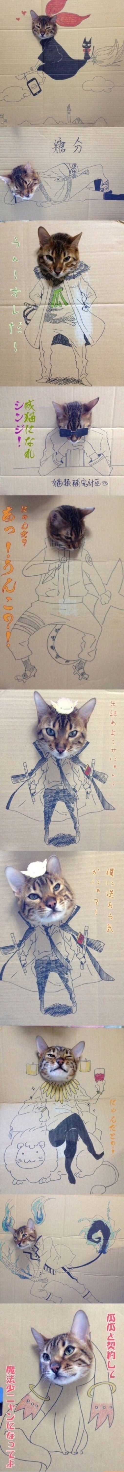 Creative kitty