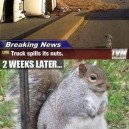 Lucky squirrels!